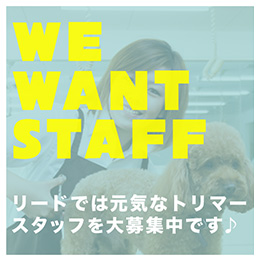 WE WANT STAFF